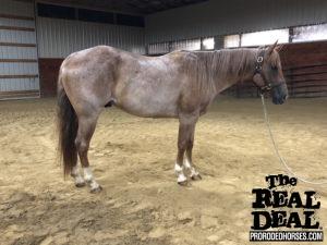 ALL) HORSES FOR SALE – ProRodeoHorses com